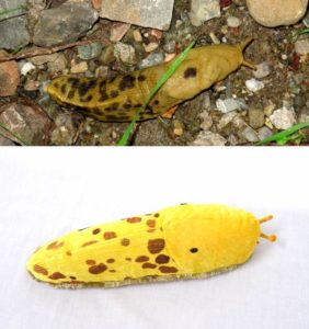 custom plush toy from a photo of a banana slug